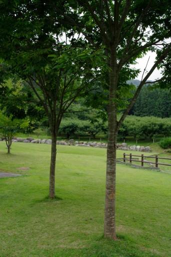 PENTAX K20D + DA 21mm F3.2 AL Limited, 丹波篠山渓谷の森公園の広場の木立