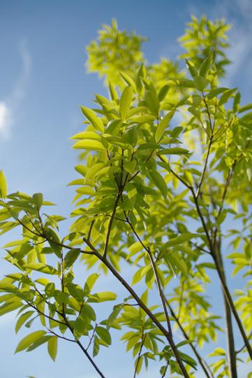 淡い緑の木の葉たち