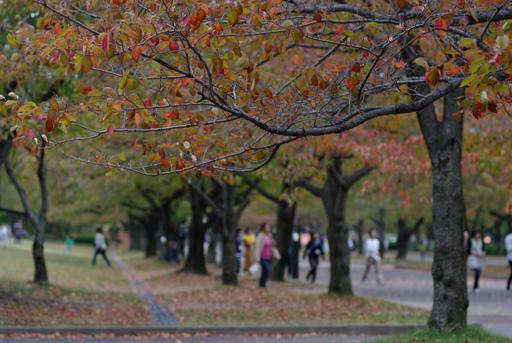 万博公園 東大路の桜並木