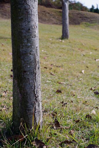 木立は冬の装い