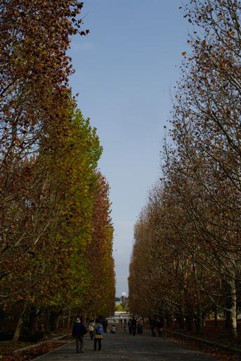 万博公園 西大路のプラタナス並木