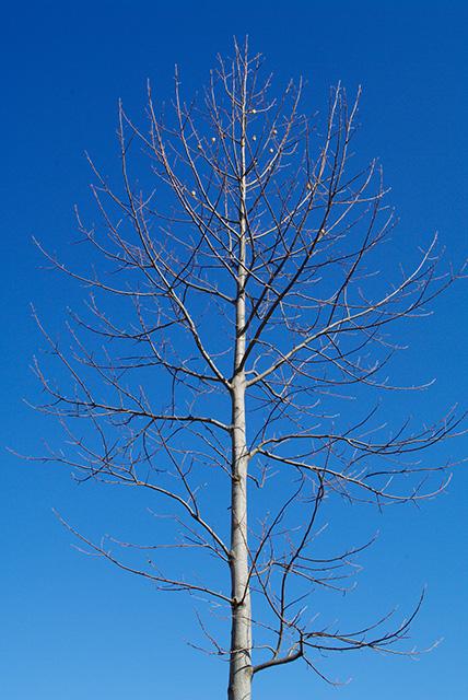 春を待つ樹木, K20D + PENTAX-A 28mm F2.0