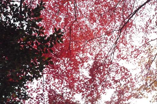 ハルの撮った紅葉流し撮り写真2, Lumix FX37