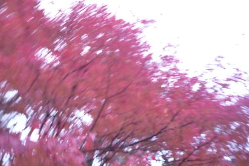 ハルの撮った紅葉流し撮り写真1, Lumix FX37