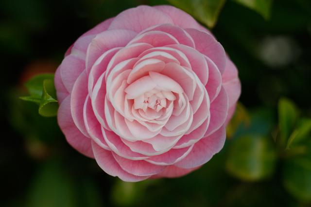 一輪の花の写真